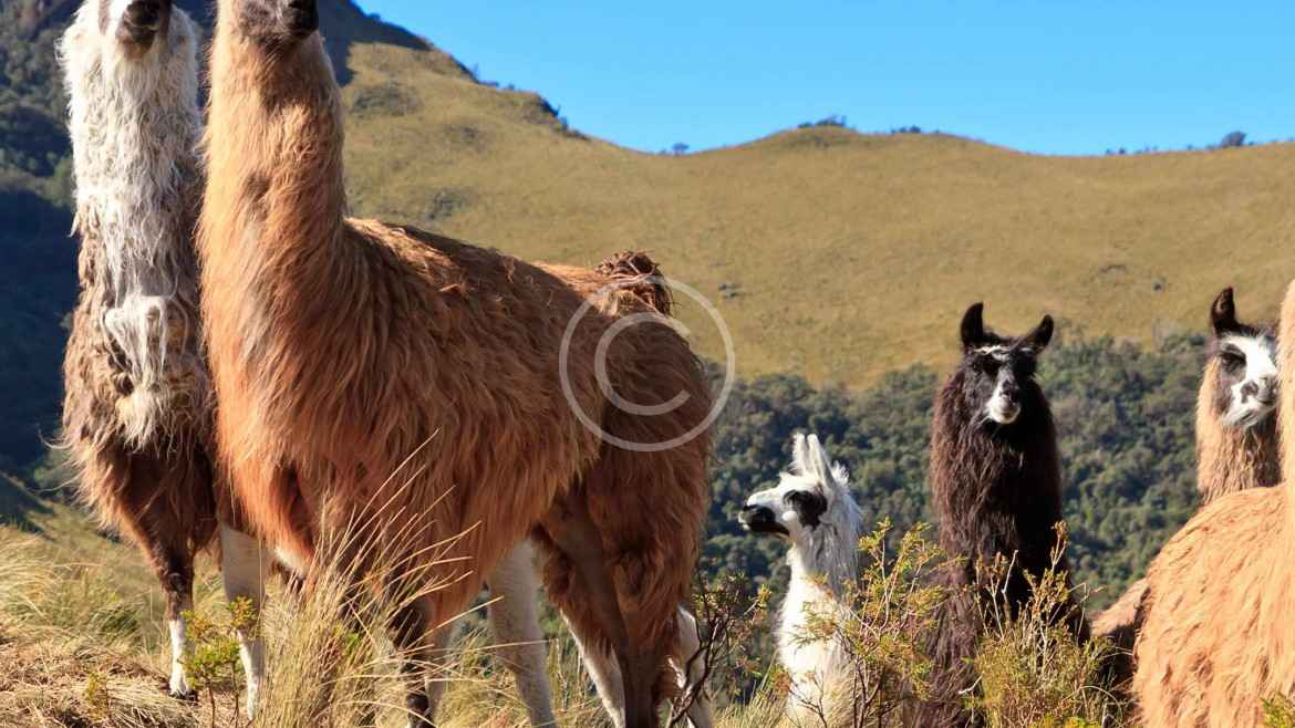 Argentina Travel Guide and Information